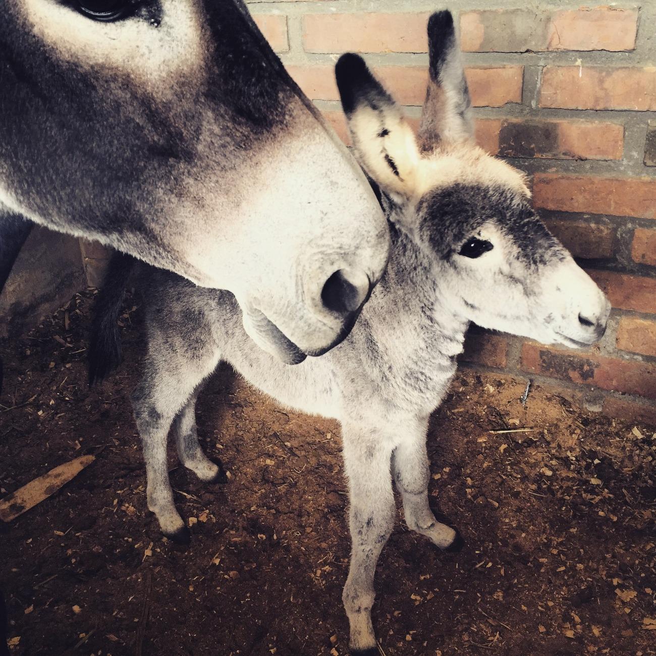 donkey-1674937_1920